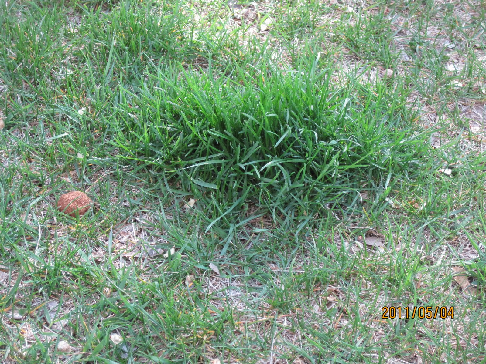 Swift 39 s gardening blog swift horticultural enterprises for How to fix dog urine spots on lawn