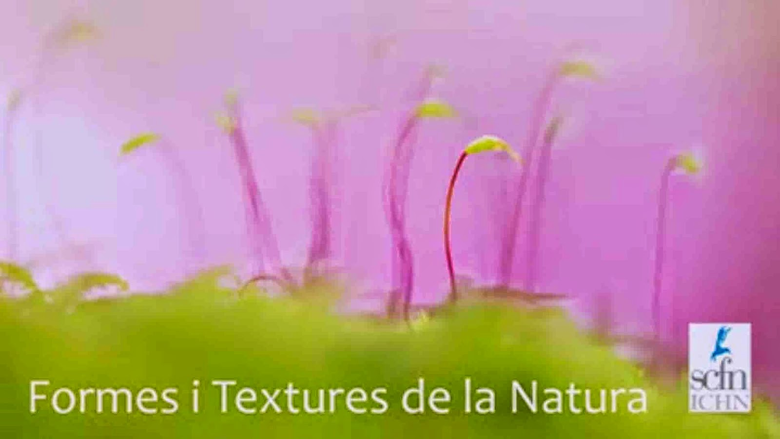 Formes i textures a la natura.
