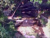 Disminución del caudal del rio por obstrucción de basura