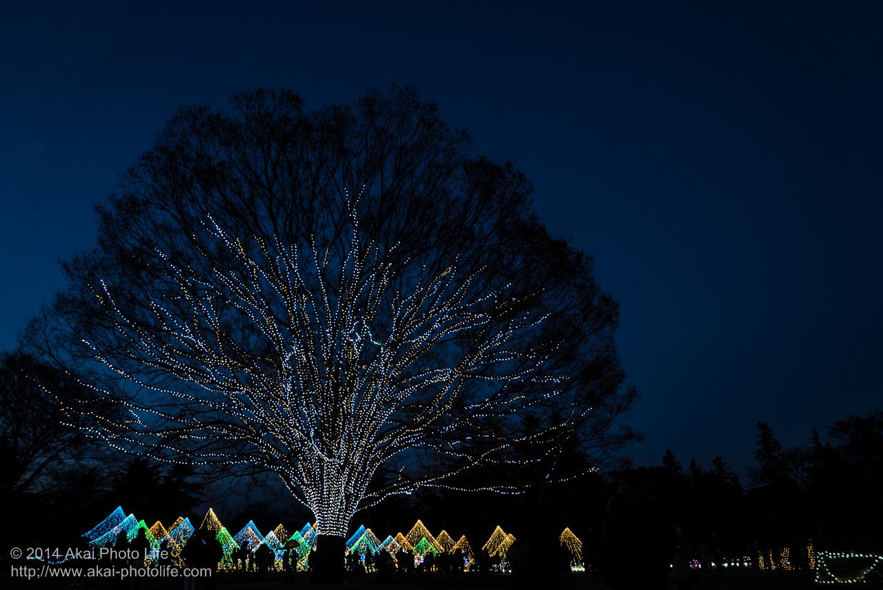 国営昭和記念公園のイルミネーション(大木)