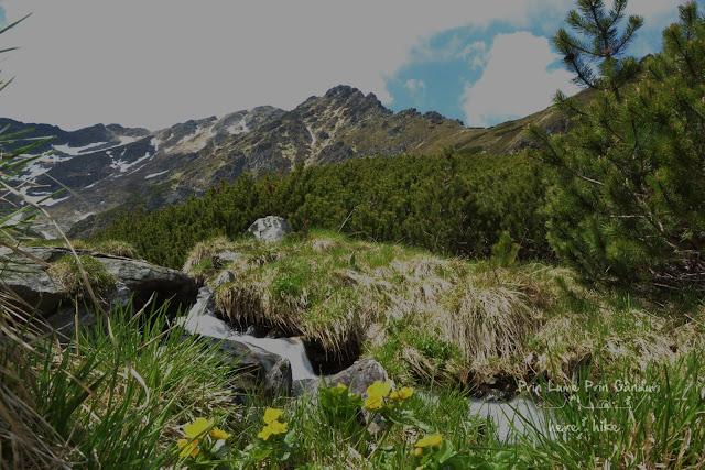 maramures-rodnei-pietrosu