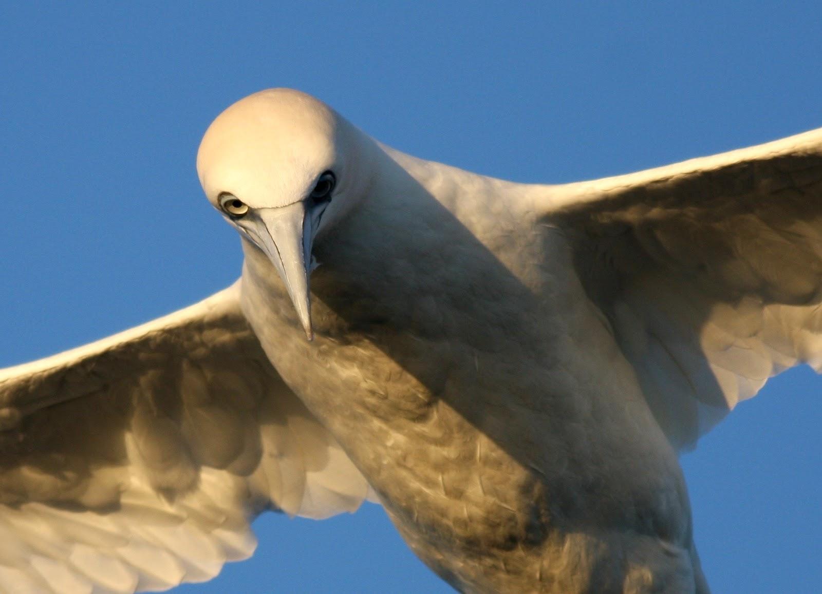 Seabirding saturday january 2 2016 virginia for Piece of fish
