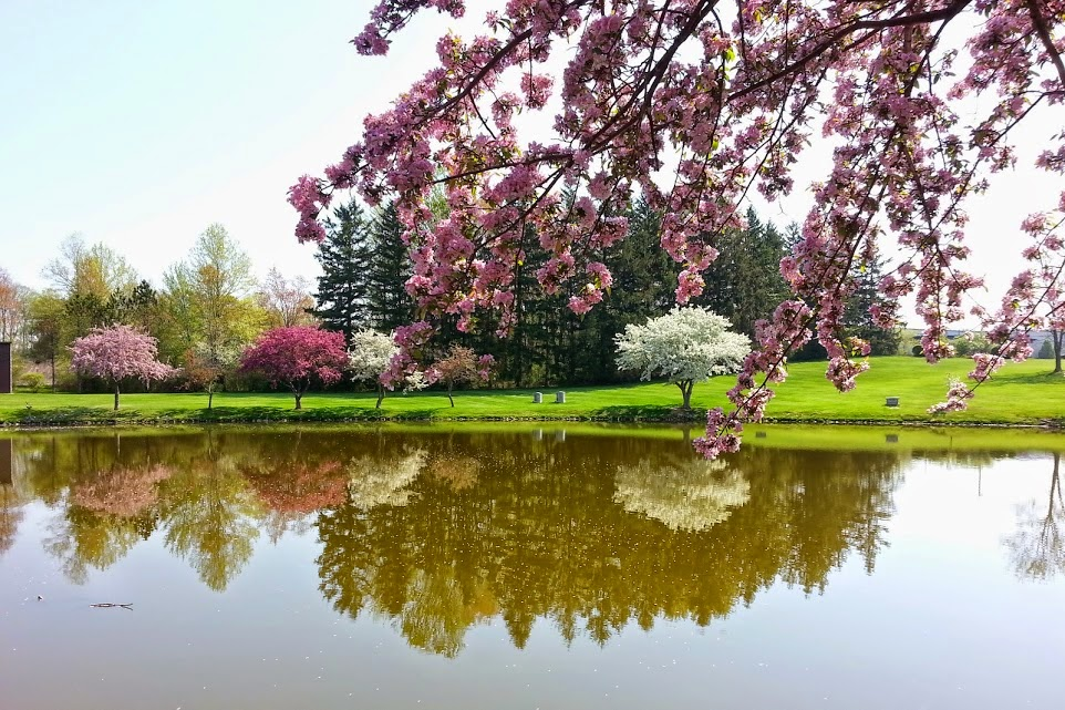 ... pictures at Northlawn Memorial Gardens in Peninsula, Ohio. The trees reflected in the lake looked just like a painting and the colors could inspire you ...