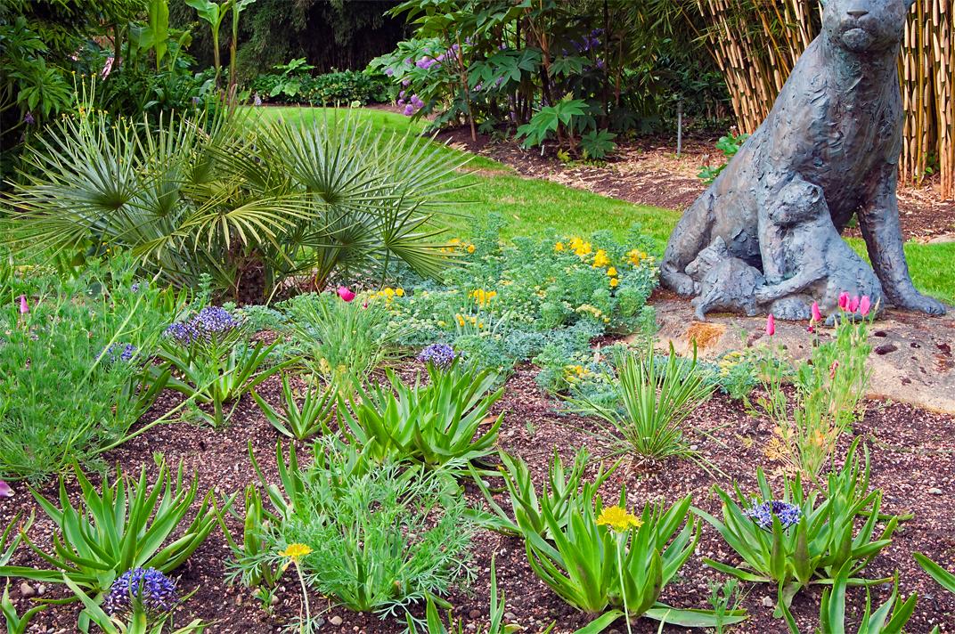 Linda cochran s garden planting scheme with tropaeolum pollyphyllum