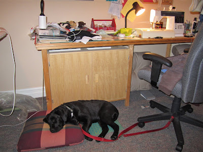 This is a picture of a fairly messy sewing room containing an ironing board, an office chair, and a wooden desk piled with books, fabric, a desk light, a sewing machine, and other sewing and craft supplies. Black lab puppy Romero is on tie-down, attached by a red leash to the desk chair. He is fast asleep, curled up on top of a fabric cutting board and a small cushion on the floor of the room.