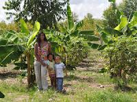 Agroforestry garden