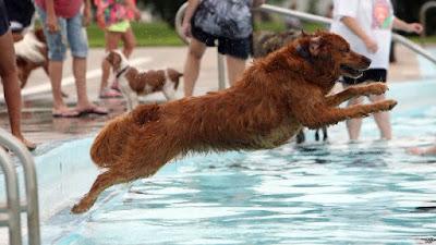 Hình ảnh gần gũi của loài chó với cuộc sống chúng ta ngày nay