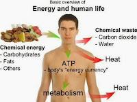 Memahami Pengertian Metabolisme dan Prosesnya