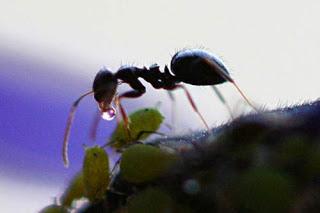 Nabi Sulaiman dan Semut