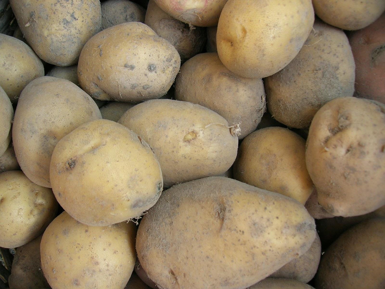 Τι πρέπει να προσέχουμε όταν αποθηκεύουμε πατάτες;