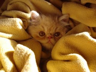 A cozy kitten