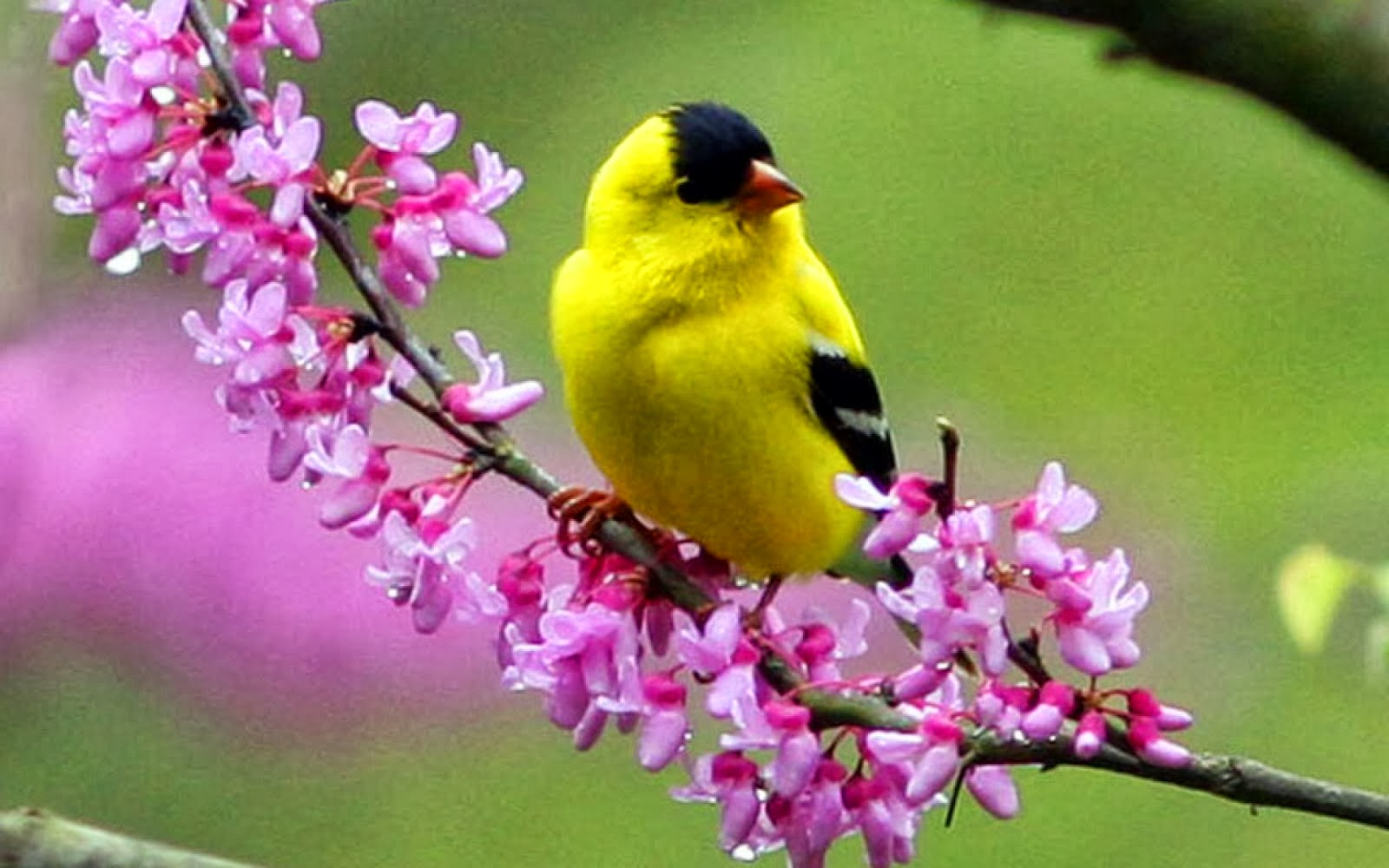 Differents Birds Pics Black And Yellow Bird Sitting On Flowers