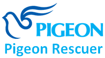 PigeonRescueTeam Blog
