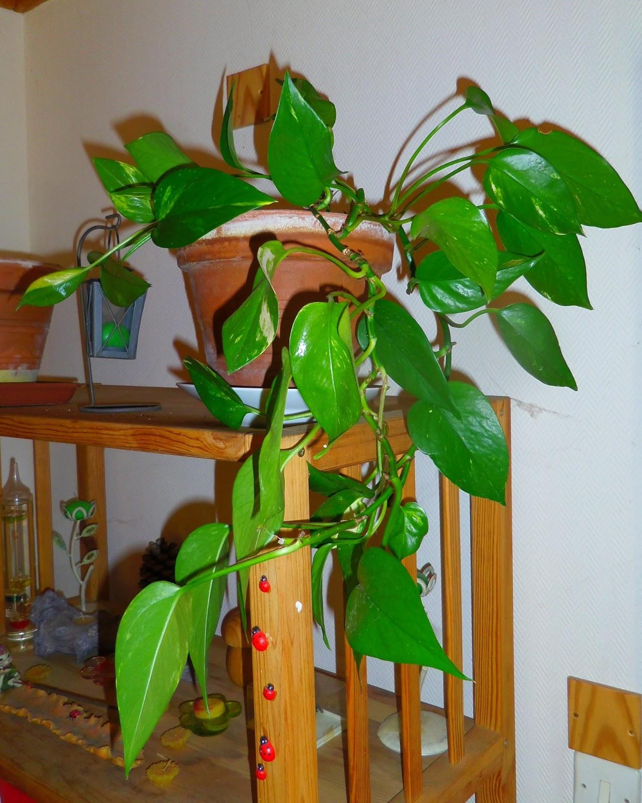 Aux petits soins pour mes plantes vertes blogs de cuisine for Plante pour cuisine
