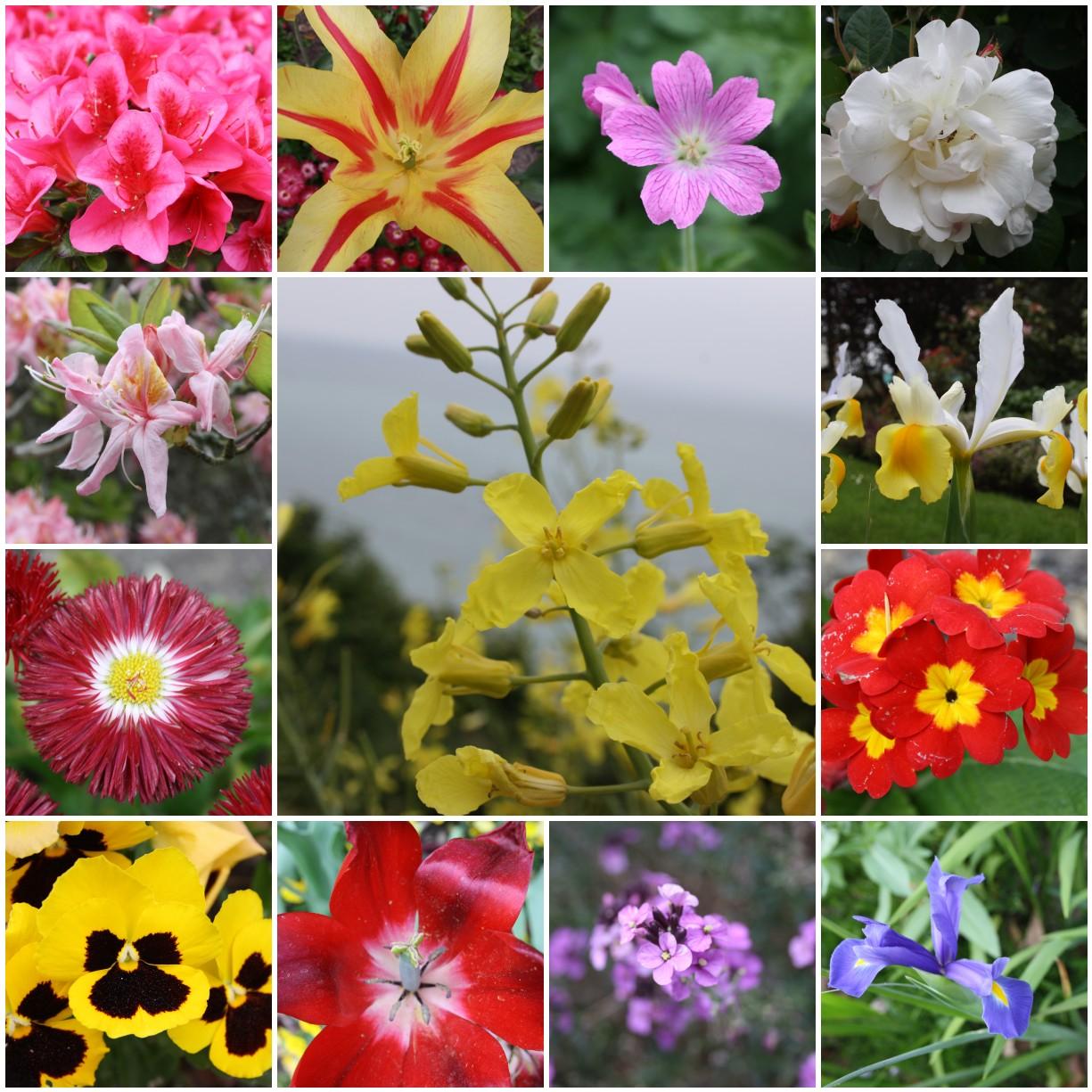 Flower Names List