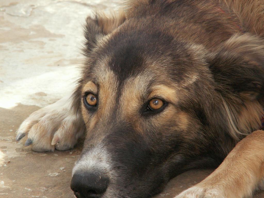 http://3.bp.blogspot.com/-nls2nGxON8o/UNh6ecAjQBI/AAAAAAAAML0/vHYB7BLCZaA/s1600/Young+Dog+Wallpaper.jpg