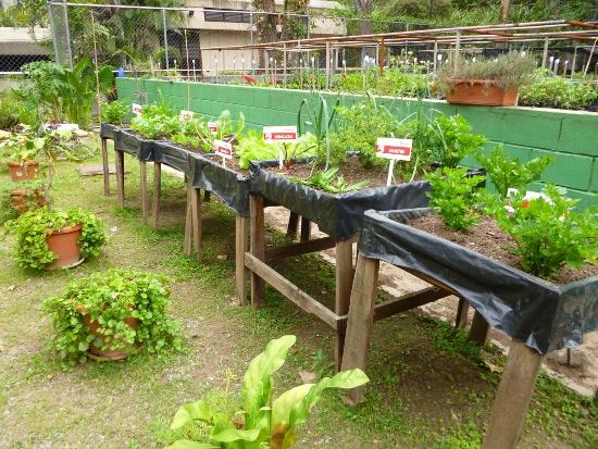 Vivero sim n bol var produce aproximadamente plantas for Viveros de plantas en buin