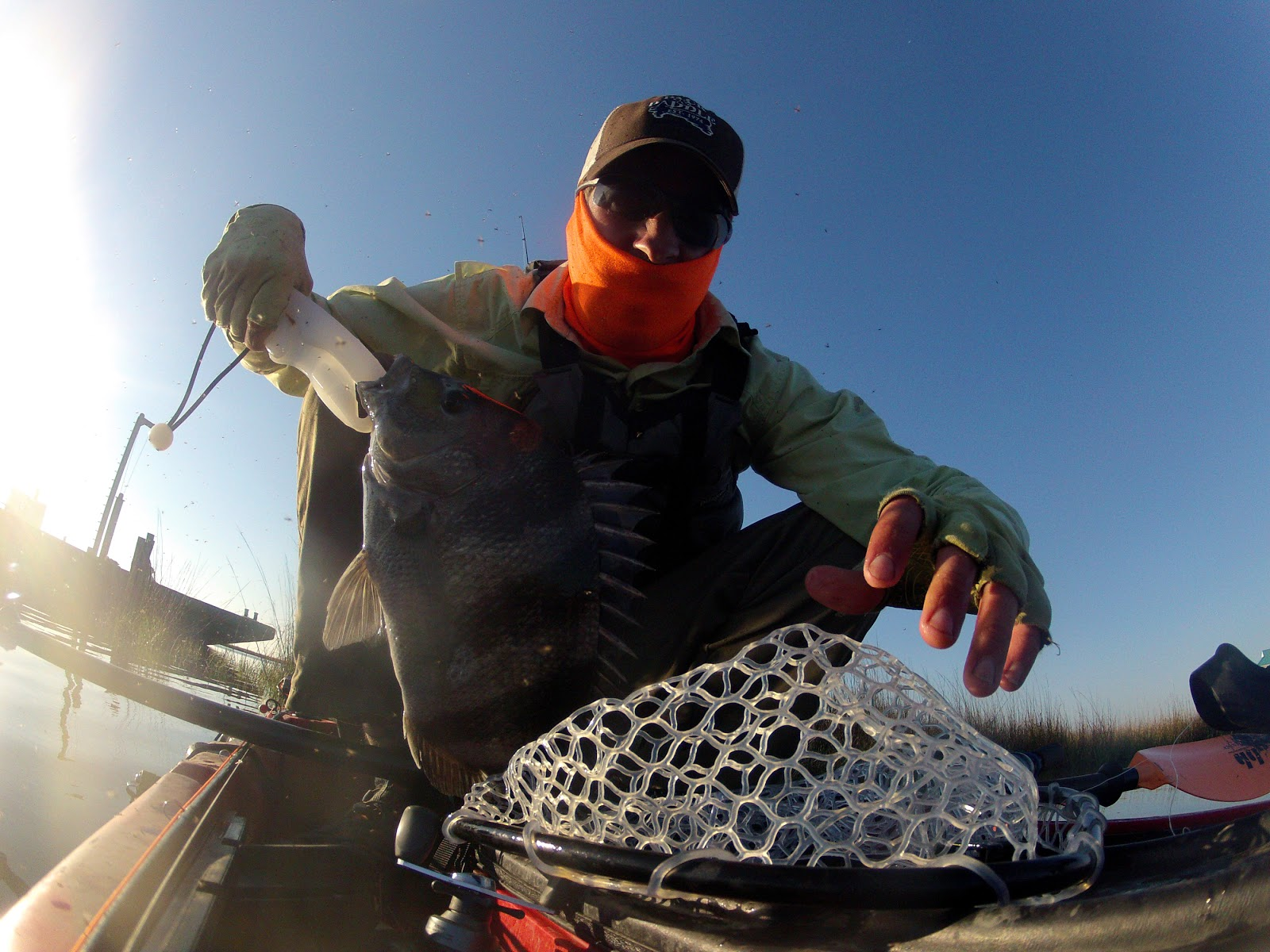 El camino blues cocodrie spooked fish report for Cocodrie fishing report
