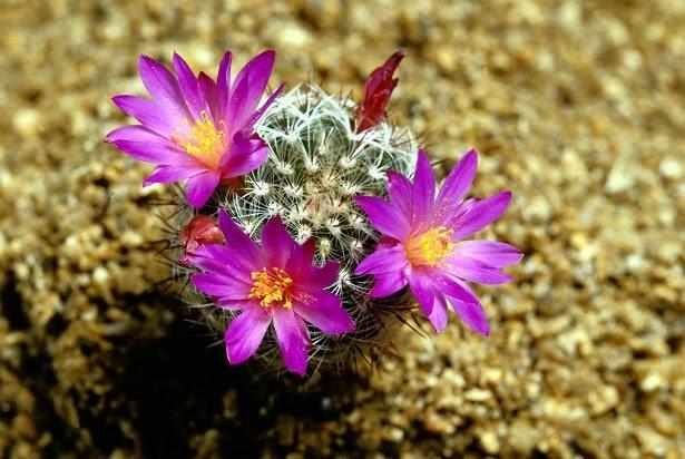 Arte y jardiner a dise o de jardines cactus el desierto - Jardineria en casa ...