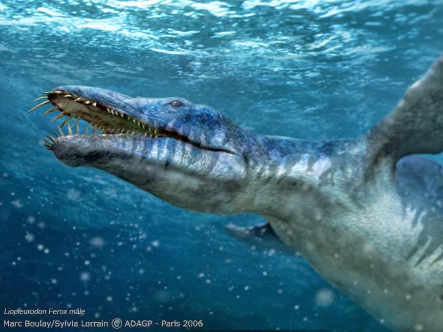 Melirik Hal-Hal Menarik Di Dunia: 5 Hewan Laut Terbesar