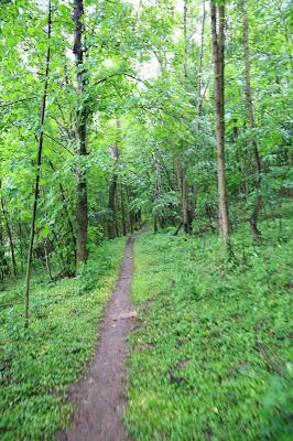Pfad durch den Hochleithenwald