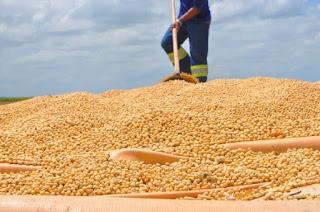 Soja abre novos horizontes de mercado para Alagoas