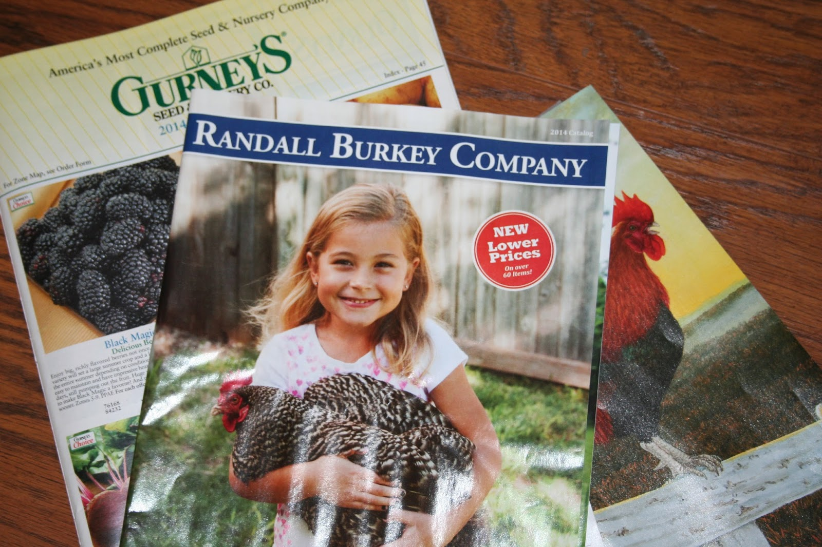 We sell over varieties of chickens, game birds, and waterfowl as eggs, baby birds, and adults. We also sell poultry supplies, equipment and books. We can ship you baby chicks to lay more eggs, to serve as meat, or even to keep as pets.