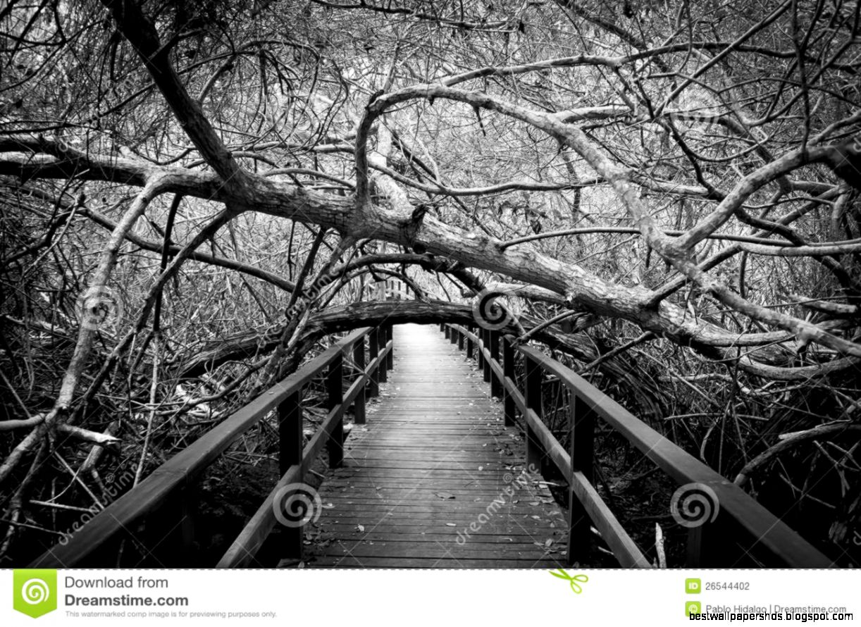 Scary Forest Stock Photos Images amp Pictures – 7729 Images