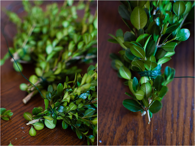 boxwood bunches