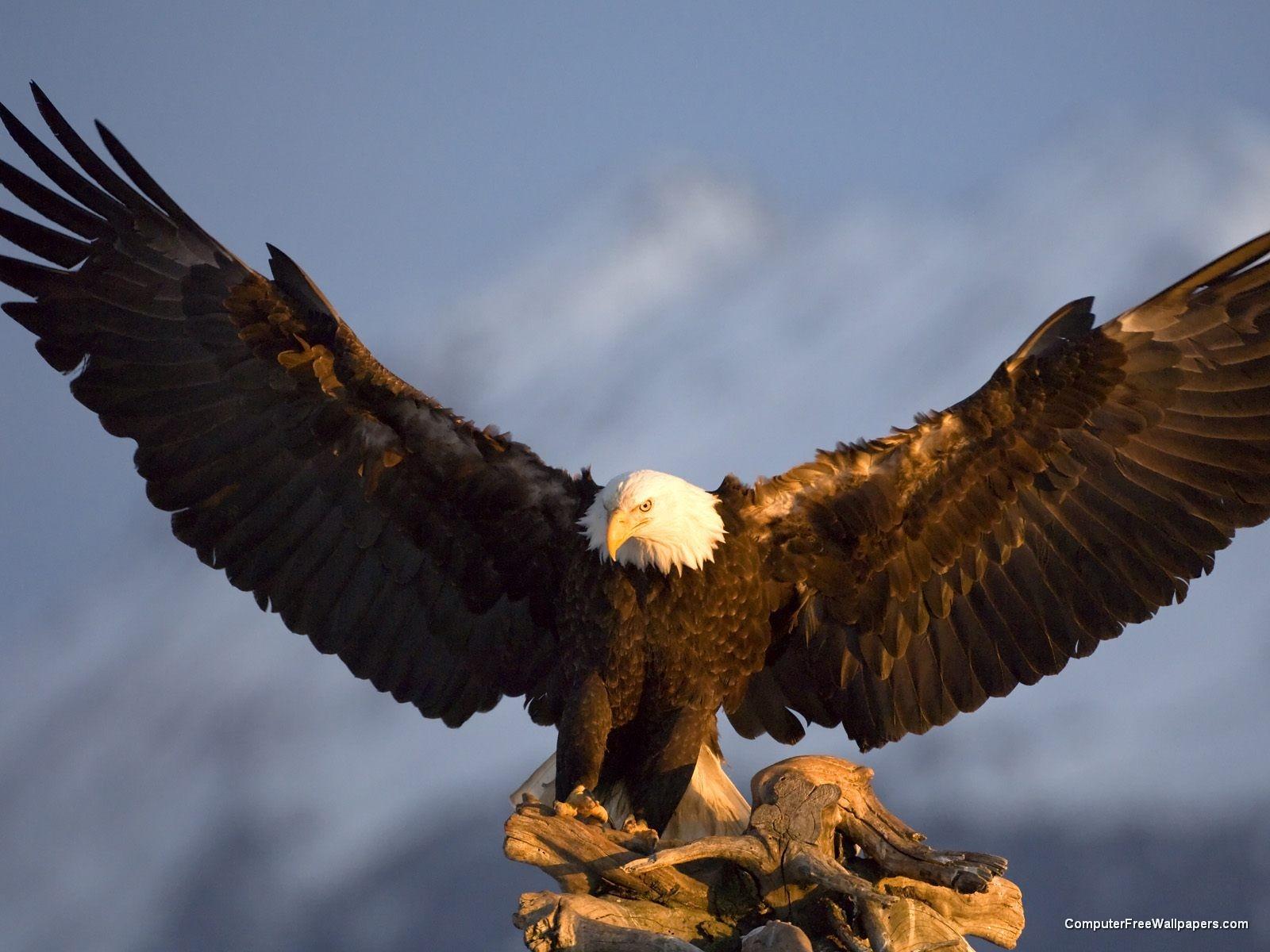 http://3.bp.blogspot.com/-nnvJ7L3DiK4/TeL-gCCaAoI/AAAAAAAAHRU/WJI-Kco2mPw/s1600/bald-eagle5.jpeg