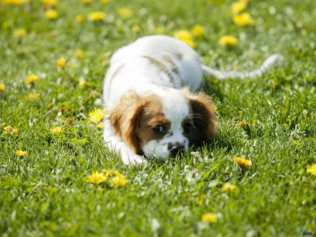 Cute dog on the grass.