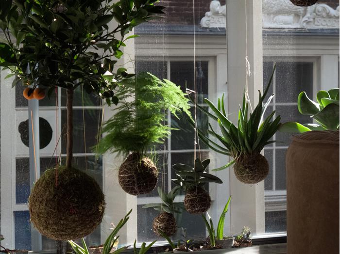 Jardin y Plantas 3