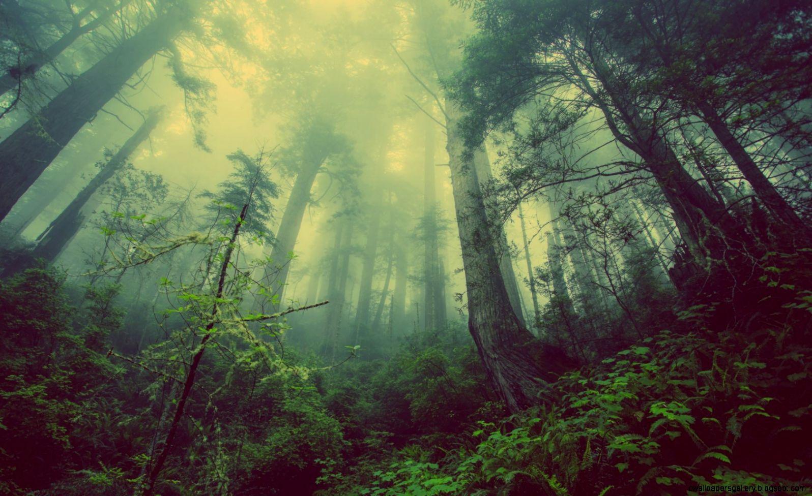 dark forest wallpaper 12