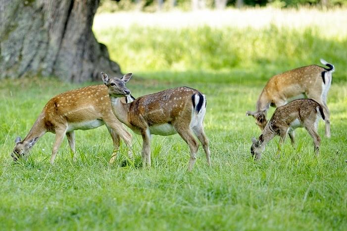 daňci, zámek v blatné, deers, vodní zámek, příroda