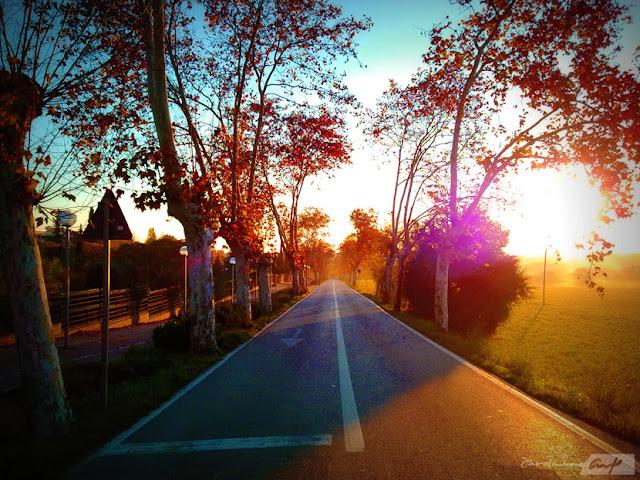 carretera-arboles-amaneciendo