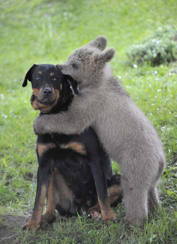 Funny animals of the week - 12 June 2015, best funny animal photos, animal pictures, cute animal photo