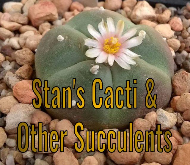 Stan's Cacti & Other Succulents