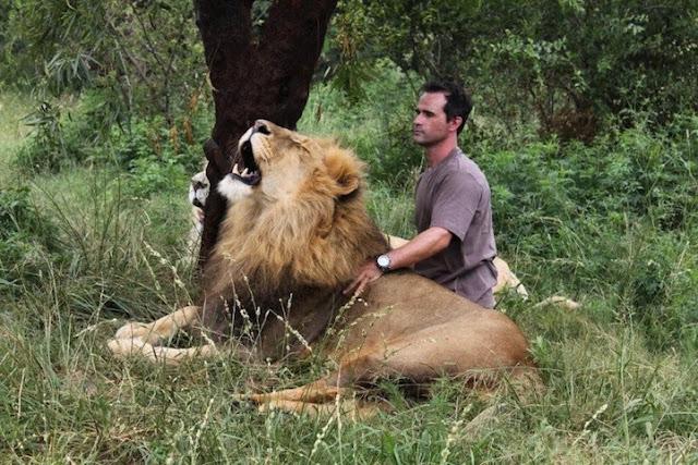 animal behaviorist,