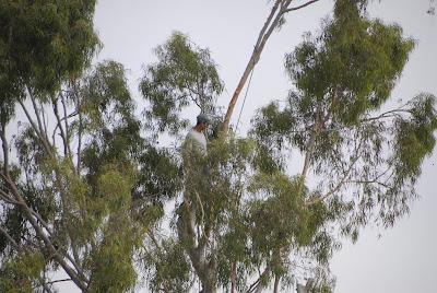tree service cutting tree limbs