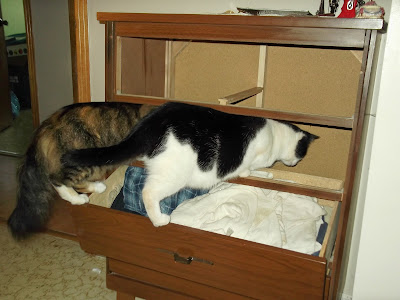 Emerald and Molly investigate the dresser cabinet further