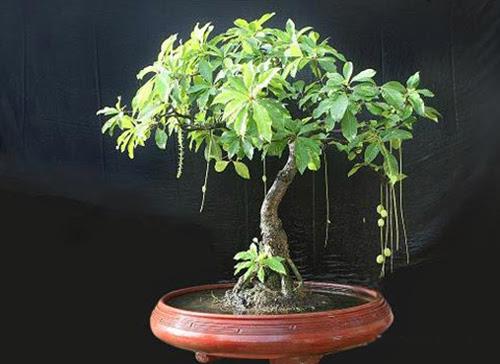 loại cây nào giúp gia chủ phát tài