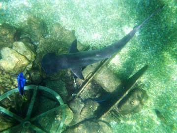 5th International Marine Conservation Congress Programme