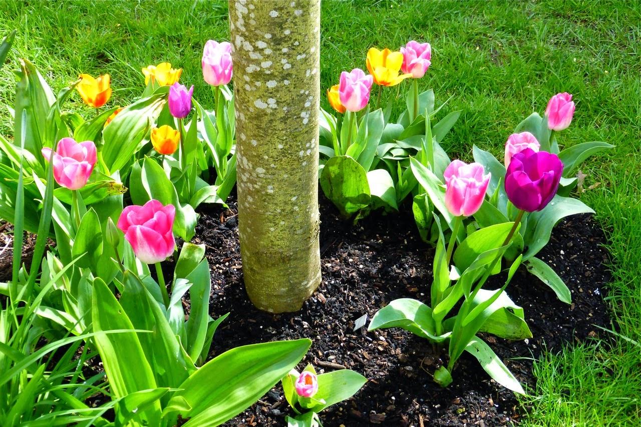 spring garden, tulips, spring tulips, pink tulips, orange tulips