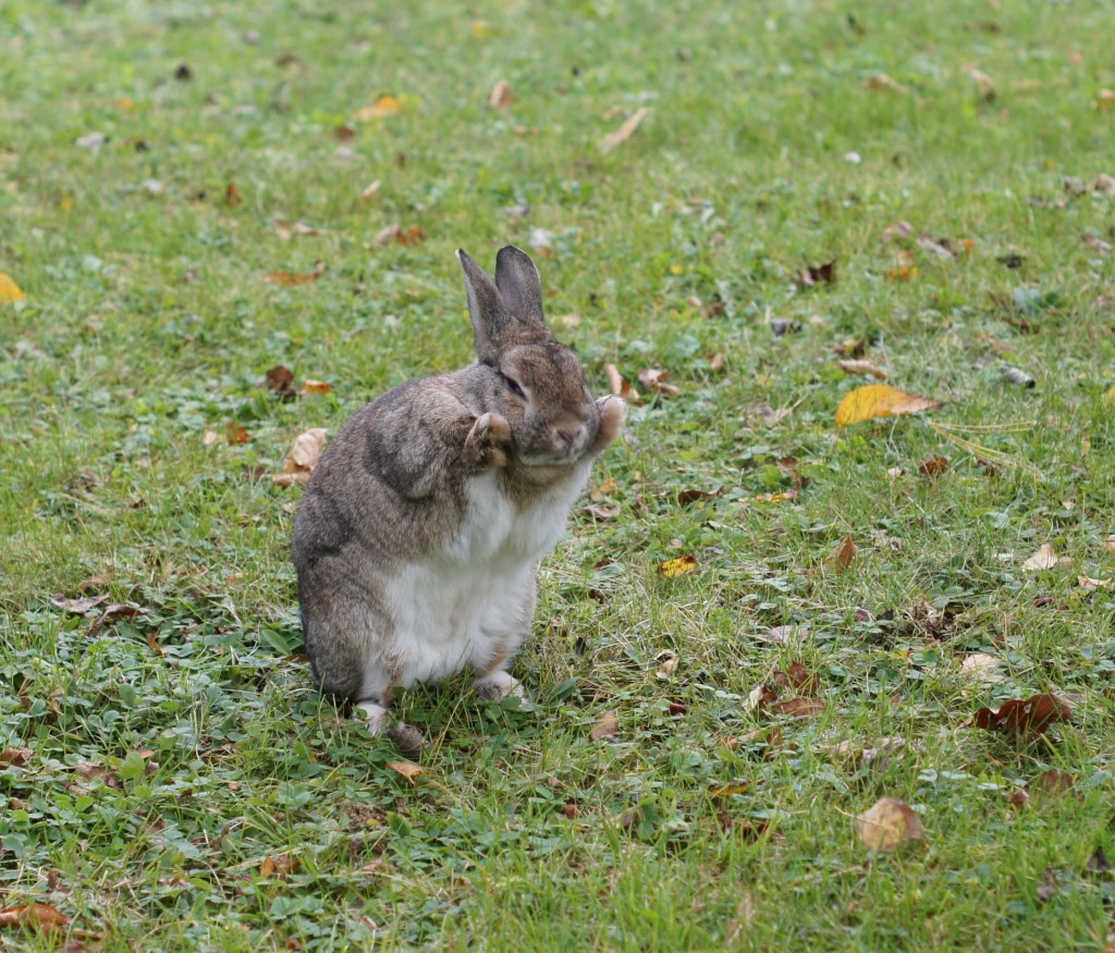 The Bunny Manifesto — Wait But Why