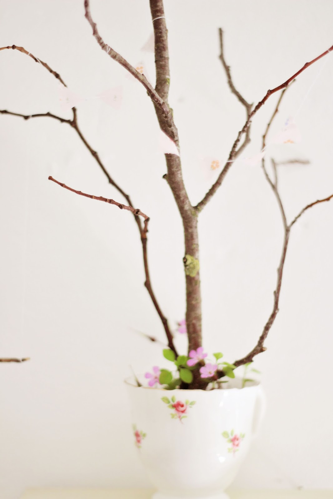 how to make a frangipani branch out