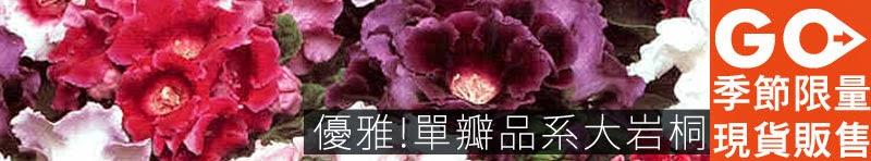 優雅單瓣大岩桐 - iGarden 2015 春播單品專題