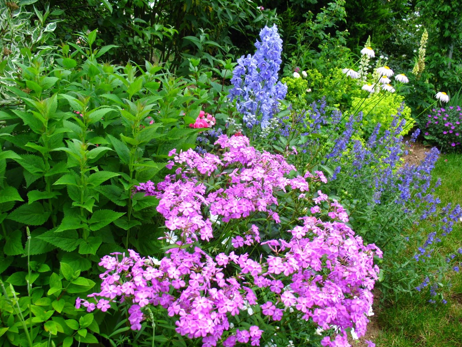 Roses du jardin ch neland la fleur du jour un phlox patant for Fleurs jaunes jardin vivace
