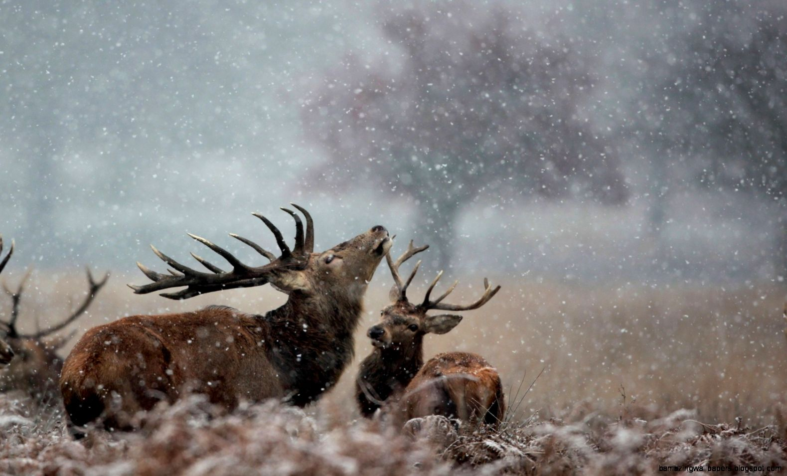 Photo Collection Wildlife In Winter Wallpaper 1280X1024