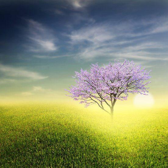 Wallpaper: Wallpaper: Natural Beauty Of Earth