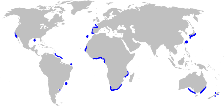 Distribution map for goblin shark (Mitsukurina owstoni )